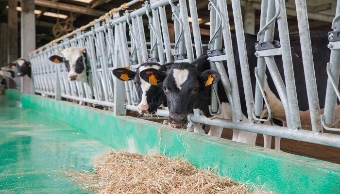 Instalaciones y salud en el ganado vacuno