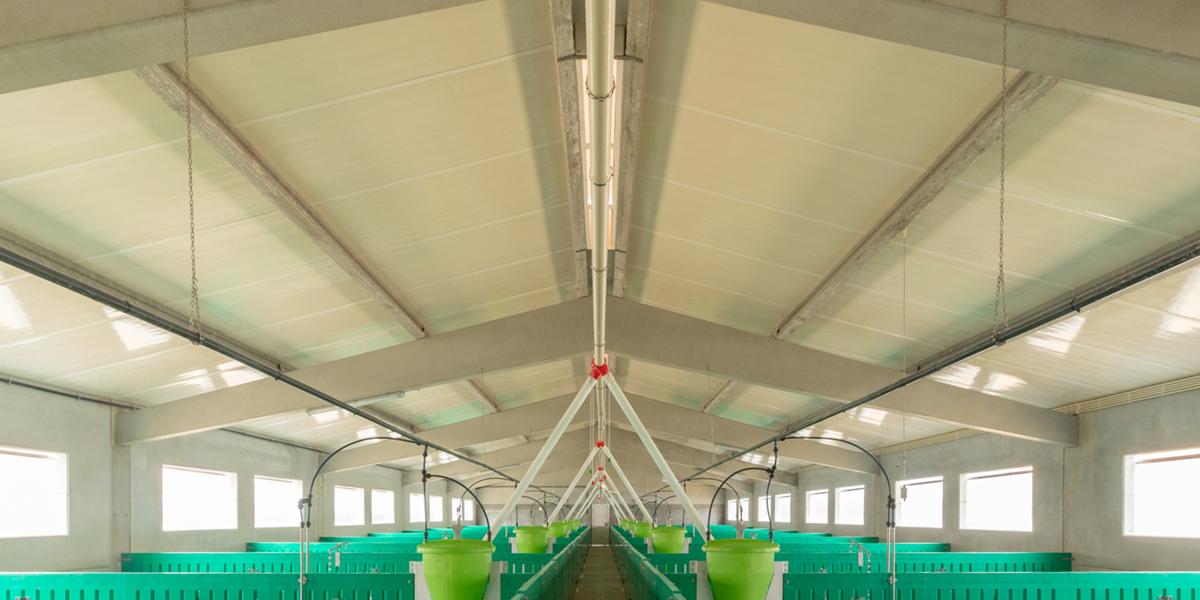 Suinicultura Porval   Agrotherm + Argila