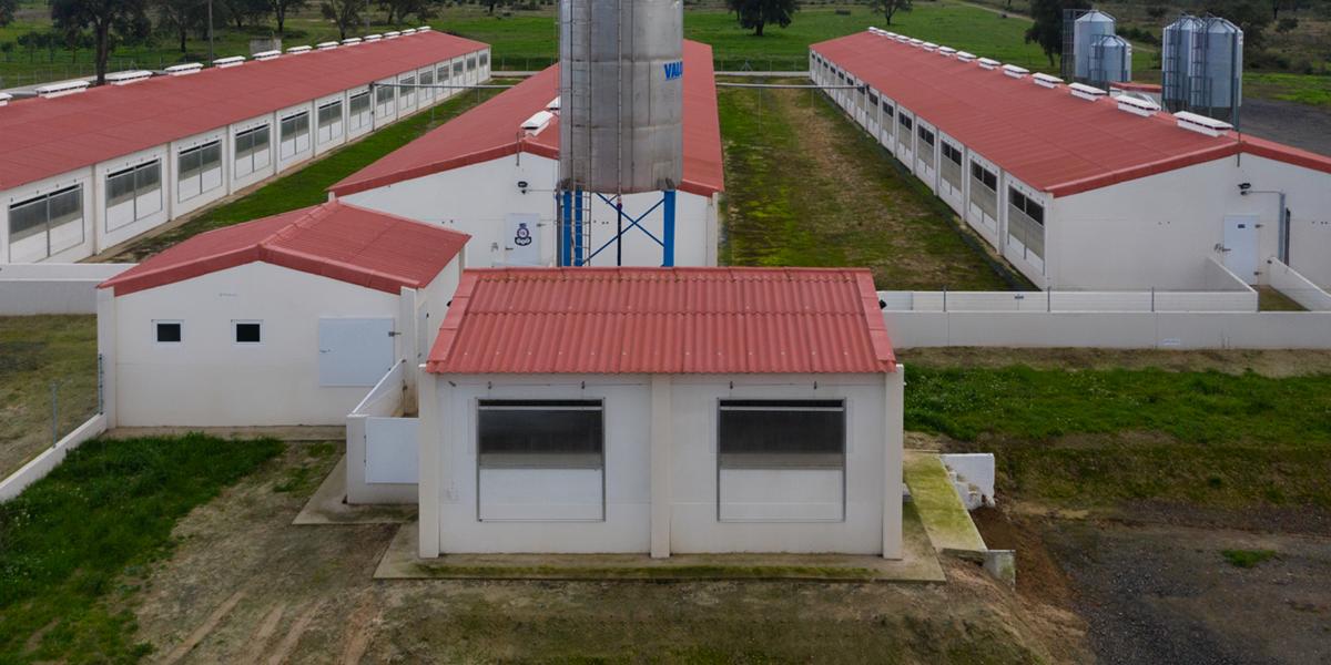 Suinicultura Valorgado | Agrotherm + Rústico Argila