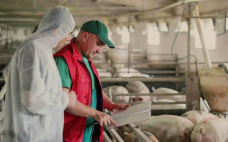 vet-farmer-pigs-bar800n_500H_1.jpg